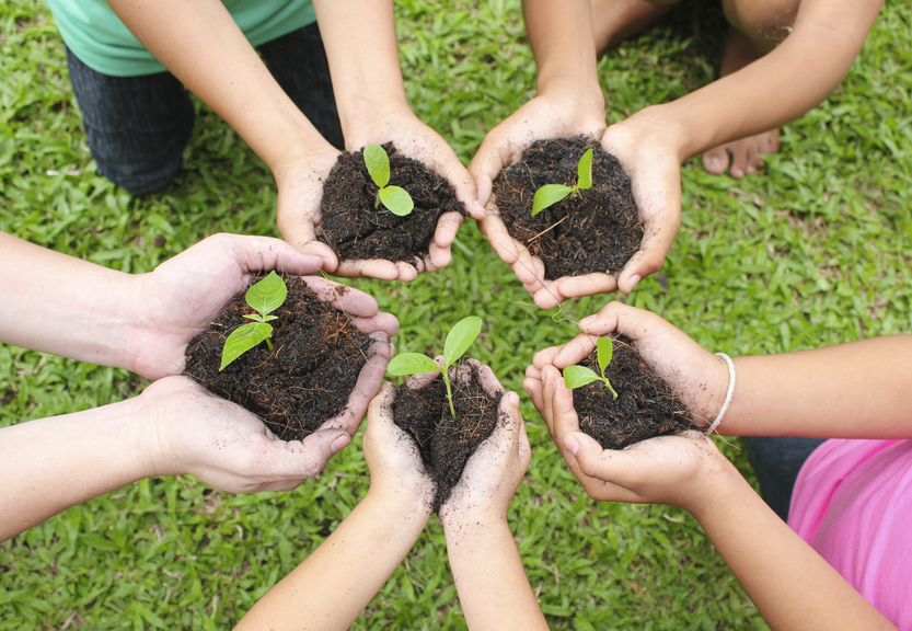 Hands holding sapling in soil surface with green grass background.